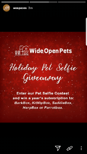 Hold a holiday photo competition on Instagram