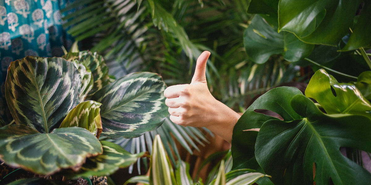 restuarant blog thumbs up